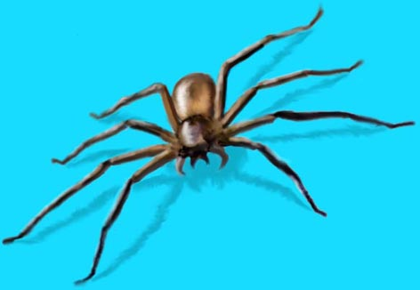 raadsel over spinnen